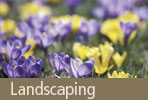 Land Scaping: Seven Steps to a Spectacular Lawn this Spring...